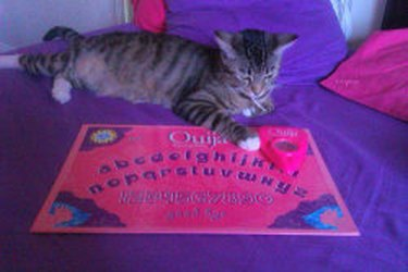 Cat with Ouija board