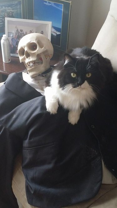 Cat sitting on skeleton Halloween decoration