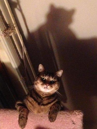 Cat looking spooky