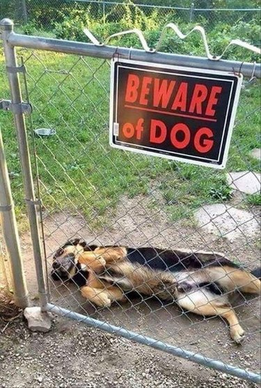 Beware of Dog sign and a not very scary dog
