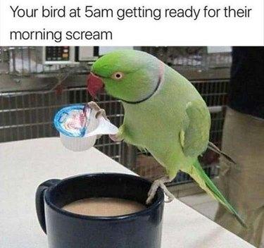 Bird putting creamer in coffee