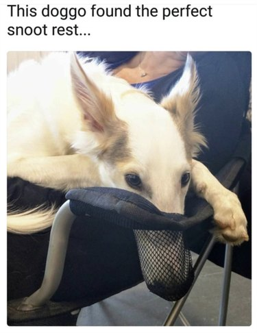 Dog with his snoot in a cup holder