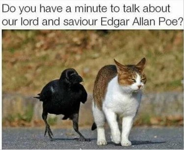 A crow and an annoyed cat