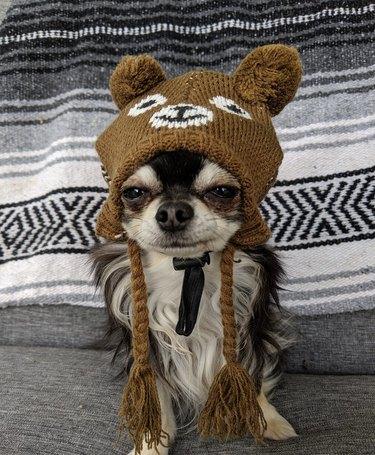 dog in hat named Splinter