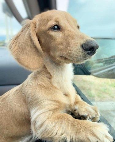 dog named Applesauce