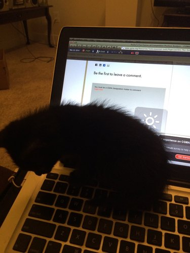 black cat sits on laptop