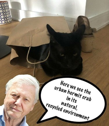 David Attenborough Your Pet Twitter Challenge