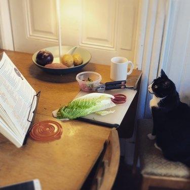 cat eyes lettuce on kitchen table