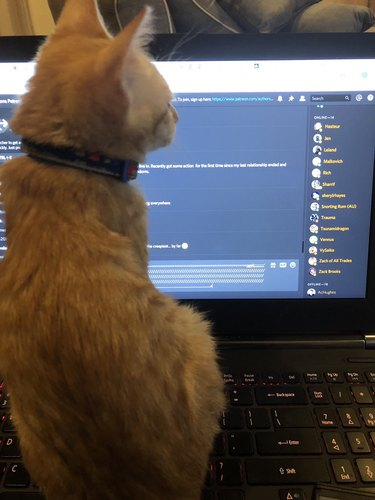 """cat sitting on laptop """"responds"""" to chat prompt"""