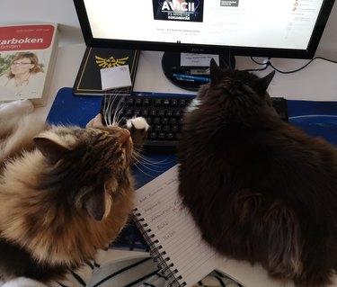 cats sleep on keyboard