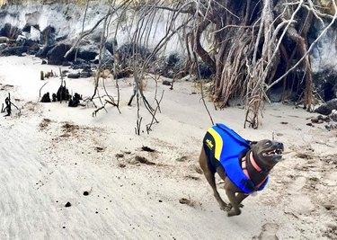 dog sprints from shoreline