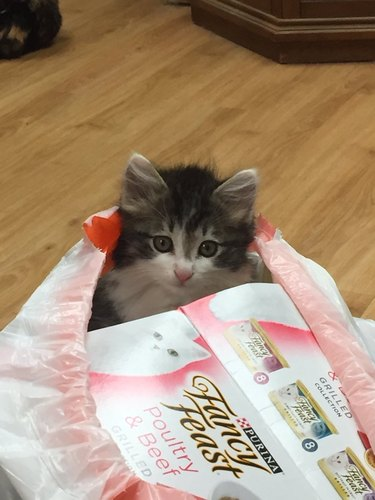 kitten in trash bag