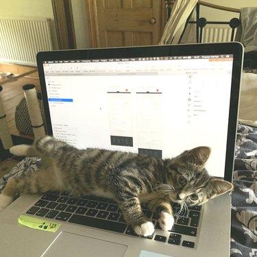 Cat sprawls across open laptop