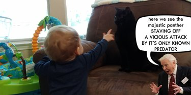 toddler approaches skeptical cat