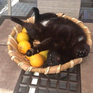cat sleeps in basket of oranges