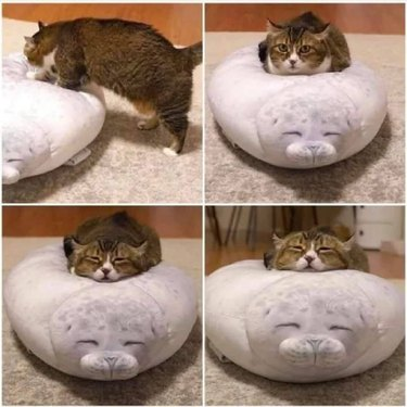 cat sleeps on cat bed shaped like seal