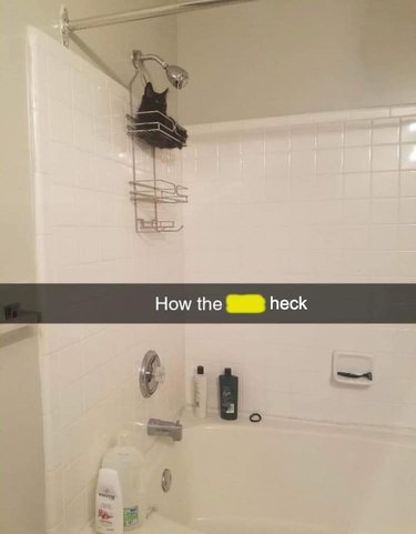 cat sleeps in shower caddy