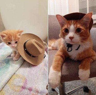 orange tabby cat in cowboy hat