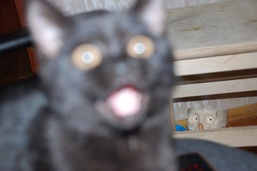cat spooked by weird cup with skeleton eyes
