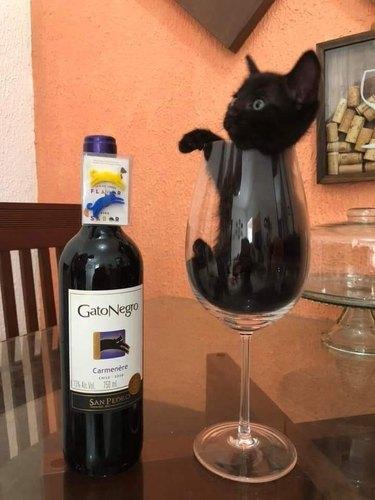 black cat in wine glass