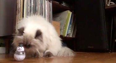 Yeti cat sizes up snowman bobblehead