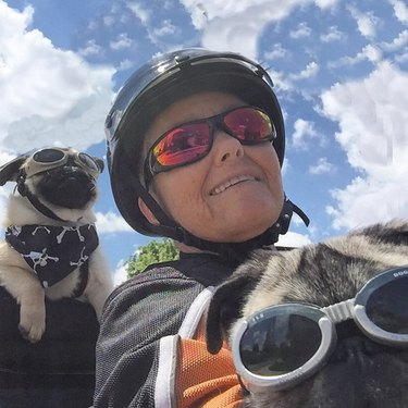 Dogs riding shotgun on your next motorcycle ride