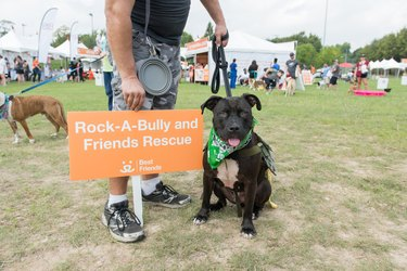 Shelters join in with BFAS to raise funds.