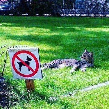 cat sleeps on grass behind of no dogs allowed sign
