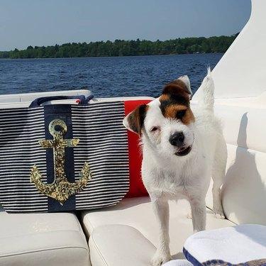 cute dog does a head tilt on a boat