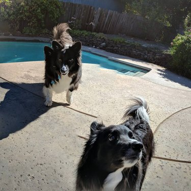 20 hilarious panoramic photo pet fails