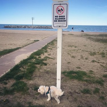 dog pees on no dogs allowed sign