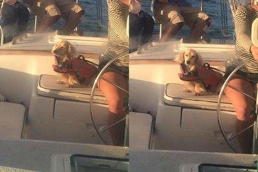 dachshund basks in sun on boat ride