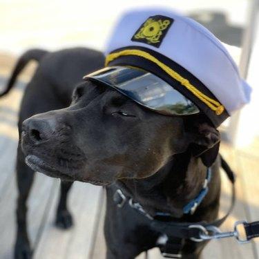 dog in boat captain's hat