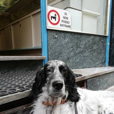 Italian dog poses in front of Italian no dogs allowed sign