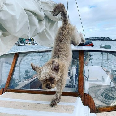 Dog jumps down from top of boat