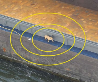 dog walks along container ship in Amsterdam