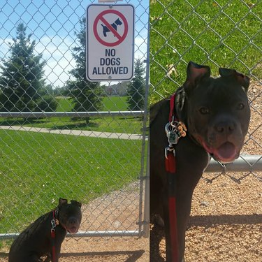 dog shocked to discover park does not allow dogs