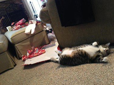 Cat opened all the Christmas presents!