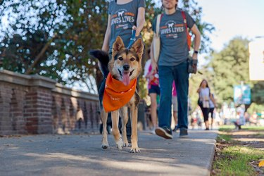 a dog walker at strut your mutt