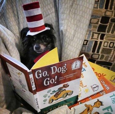 dog reading go dog go
