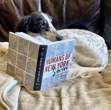 dog reading humans of new york
