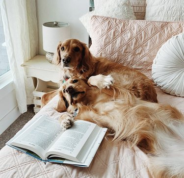 two dogs reading on a bed
