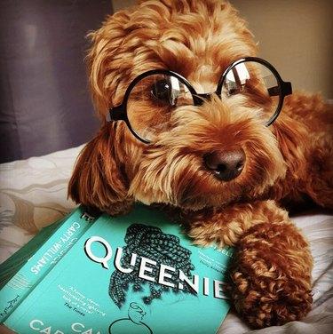 dog reading queenie