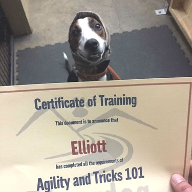 Proud puppy stands with certificate of completion