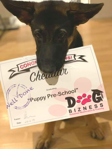 Puppy holds diploma in mouth