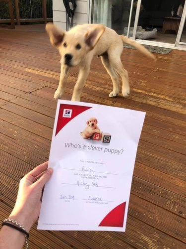 excited dog receives diploma