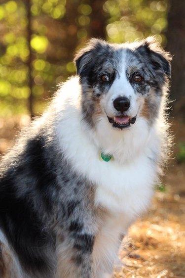 dog named Angus