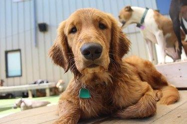 dog named Ralph