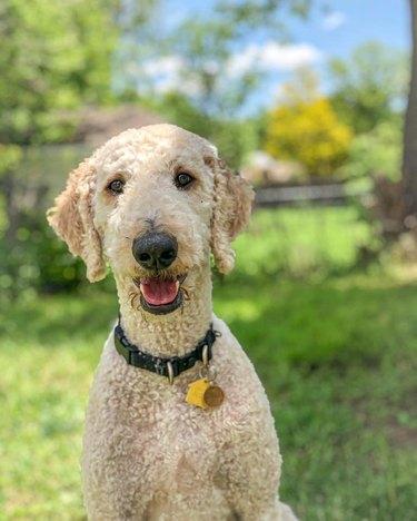 dog named Stanley