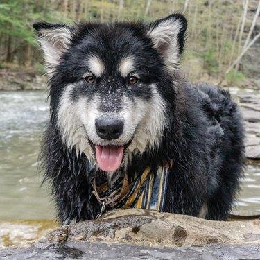 dog named Silas